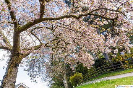 real jardin botanico edimburgo